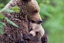 cute animals / by Lizzy Nuñez