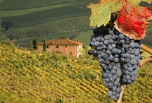 Chianti / Known worldwide for its wine, this area between Florence and Siena offers rolling hills, vineyards, castles and more.
