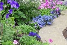 Garden-design / by Lorna Coulthart
