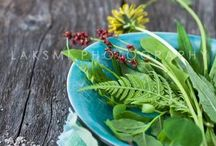 { Wild Nutrition } / ~ Eat Your Weeds ~