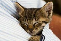 Animals- y u so cute?! / by Silvia Angér