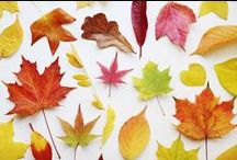 Autumnal / My favorite time of the year! Apples, pumpkins, leaves, cozy sweaters, hot drinks.