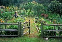 In the garden / gardening, outdoors, nature