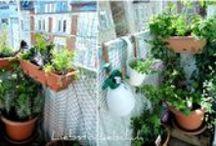 Urban Gardening / Alles, was sich essbares und dekoratives auf dem Balkon, auf der Terrasse oder im Hofgärtchen anbauen lässt.