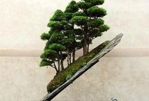 Bonsai / Plant  Bonsai Tree  Seed and you will have a wonderful addition to your tree collection. Starting trees from seed with some care you can have a  beautiful bonsai tree that you can enjoy every day in your garden or home.