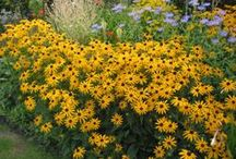 Buy Flower Seed Online
