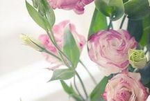 flowers / by dkshopgirl
