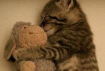 Furry Friends / by Kristel Sherwood