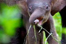 animals.... / So cute! So fierce!  / by Kaylee Minnick