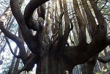woodsy / woods, trees, spirit, forest / by Kate Knox