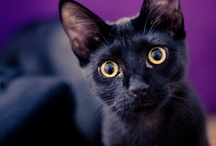 KittyKats / Cats...  Especially fond of the black variety... mEoW! / by Sun Kat