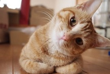 Cute and Fluffy / Cute Animals To Melt Your Heart.