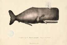 Whales / by Noa Bern