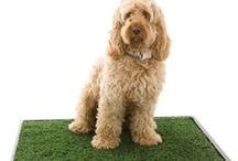 Housebreaking Your Pet