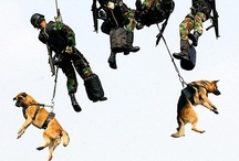 Dogs to the Rescue! / Dogs are loyal, brave, and heroic!