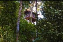 Jungle Hideaways
