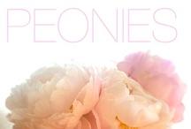 Peonies....♥