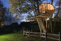 Tree House / by Mercedes Dugan