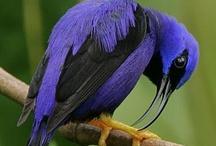 Birds / Birds of all kinds!