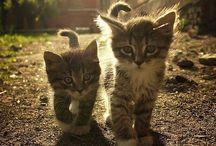 gatti♥♡