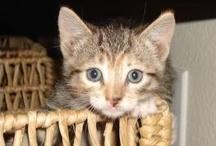 Kitties / by Denise