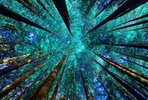 Teal/Aqua/Turquoise~ / by Đanıeℓℓe L.
