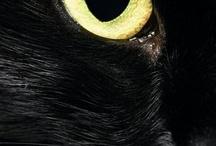 Black~ / by Đanıeℓℓe L.