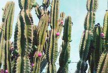 Plants & Nature / by Nautical Wheeler Jewelry
