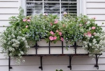 Window Box Ideas! / We created this board to show off everyone's ideas of the prettiest window box.  Please pin with respect. / by Country Garden ~ Cape Cod
