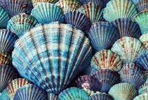 Seashells / by Nautical Wheeler Jewelry