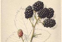 Botanical Illustrations / by Noémi Kiss-Deáki