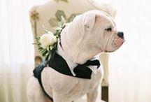 Casamento | Melhor Amigo / by Iana Coelho