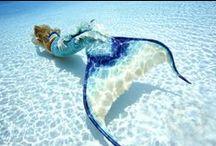 Mermaids / by Nautical Wheeler Jewelry