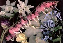 G-Garden--Where I Visit God / by Joanna Kressaty