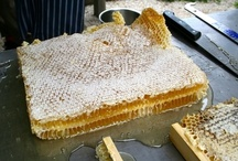 beekeeping / by Mary Beth Jarrosak