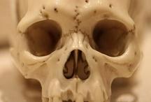 Skulls & Skeletons / by Shannon
