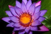 G-Garden--Front--Right--Purple / by Joanna Kressaty