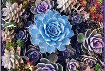 G-Garden--Succulents / by Joanna Kressaty