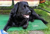 """Best Dogs / Здесь мои любимые друзья собаки. Кто то уже умер, а кто-то радует сейчас. Собаки это верные друзья по жизни. Они тебя никогода не предадут, они не могут обижаться на тебя. Они всегда с тобой. И если их нет, то они в твоем сердце. / by АО """"Компания инноваций и технологий"""""""