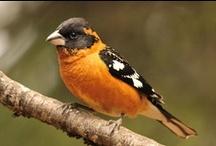 Birds I've seen...