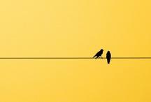 il colore giallo