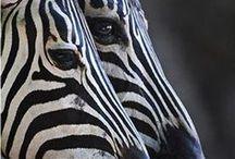 Animals - Safari / by Meghan Spegal