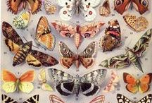 The butterflies are free / by Zoe   ☽✪☾