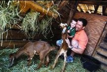 Farmyard / http://www.lambsfarm.org/business-attractions/farmyard/