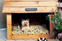 Dog House / by Nadia Nel