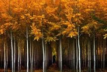 Trees, glorious Trees / Tree-hugger at heart. / by Kathy Hagedorn-Kortvejesi