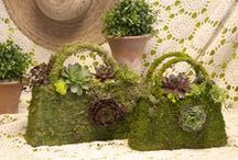 Topiaries / Simply Succulents® creates unique topiary garden art using our succulent plants. Living topiary designs like our succulent topiary turtles, topiary mushrooms, succulent living wreaths, and garden stone planters planted with our hardy hen & chicks are just a few of our topiary designs. Our living garden topiaries and stone planters are planted using a variety of succulents from our collections of sedum, sempervivum, jovibarba and succulents.