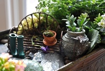 Miniatures, Terrariums & Fairy Gardens