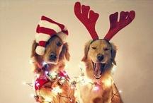 Holidays / by Jasmina Marie