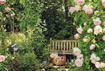 Garden / by Jasmina Marie